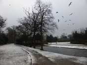 Snow in Valentine park