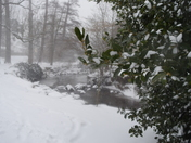 The Byes in the snow