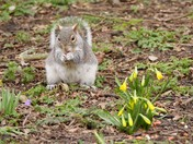Spring coming at last....