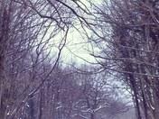 Winter wonderland?!