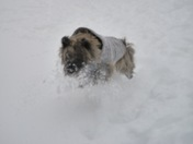 Belle having fun in the snow