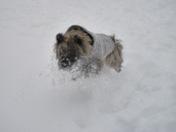 Belle having fun in the snow