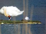 iWitters visit Lackford Lakes