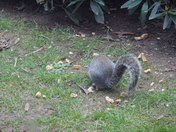 THE HUNGRY GREY SQUIRREL - FINAL PART 6