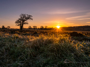 Cuckoo lane sunrise