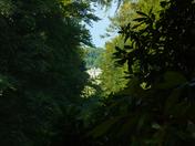 Sheringham Park- Greenery