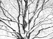Snow Trees in Exmouth