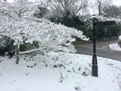 Snowy Sidmouth