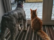Pets Coco the dog and Lenny the cat ready for the spring sunshine