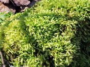 Something Green - moss