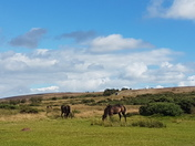 Family Adventures in North Devon