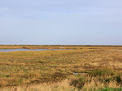 Across the marshes from Blakeney