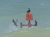 Sheringham High Tide, Cormorant Flying Off Just In Time