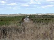 Upton Dyke & Marshes