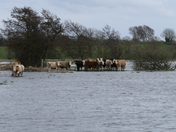 Flood water!