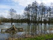 Flooded Meadows At Fakenham