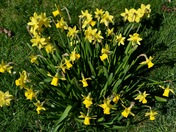 Spring has really arrived in Aldborough Hatch!
