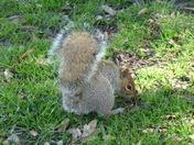 wildlife in Clarence park