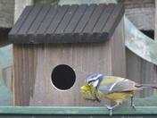 Nest building between the showers