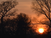 Sunset and Silhouetted Trees Waldringfield