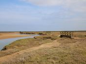 Sunny Marshes