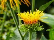 BOKEH. Yellow Bloom