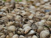 BOKEH. Shells