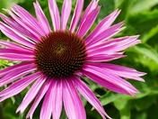 BOKEH. Pink Bloom