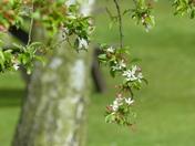BOKEH. Spring Blossom