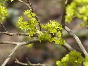 BOKEH. Tree Has New Life