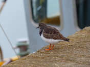 BOKEH. PLOVER ON THE QUAY