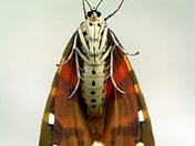 Unususal view of a moth