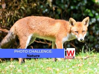 📸 PHOTO CHALLENGE 📸 Nature