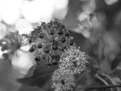 Bokeh: Seeds