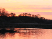 Sunset at Pensthorpe