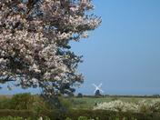 Blossom Mill