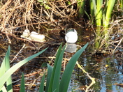 Frogspawn, Tadpoles and Litter
