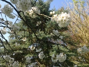Blossom and blooms