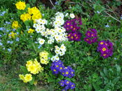 SPRING IMAGES FROM THORPE ST.ANDREW - part 1