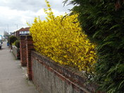 SPRING COMES TO THORPE ST.ANDREW  - PART 2