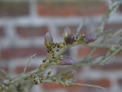 Buds and Blooms at Blickling Park