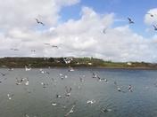 Nature.. Seagulls