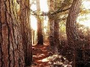Nature... Trees in Secret garden