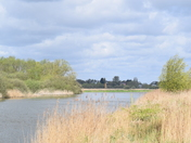 My recent visit to Oulton Marshes
