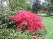 More beautiful Spring Colour from Green Island Gardens, Ardleigh, Essex