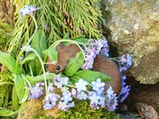 Vole hides in the Forget me nots.