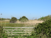 My walk on Oulton Marshes today