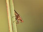 fly season