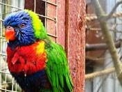 Parakeet.(Vibrance challenge)