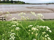 A walk along the bank in Woodbridge at low tide